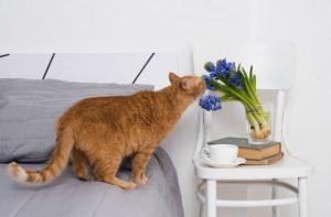 Produtos de limpeza: como escolher os aromas usados na casa?
