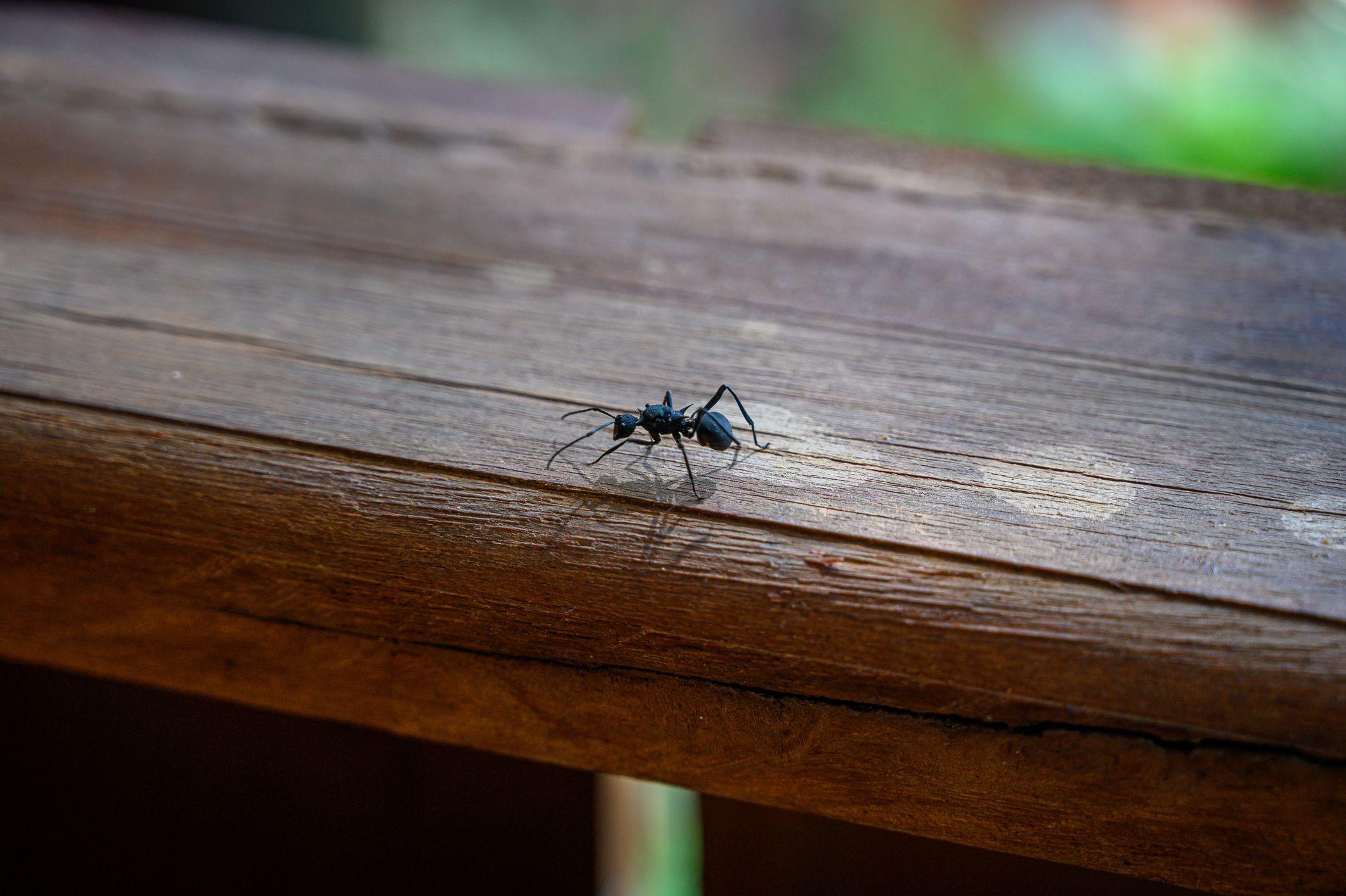 UAU repelente formigas
